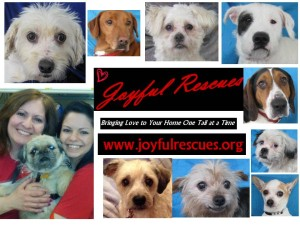 Joyful rescues