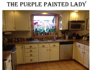 The Purple Painted Lady Kitchen BEFORE AFTER SUsan Old White 3
