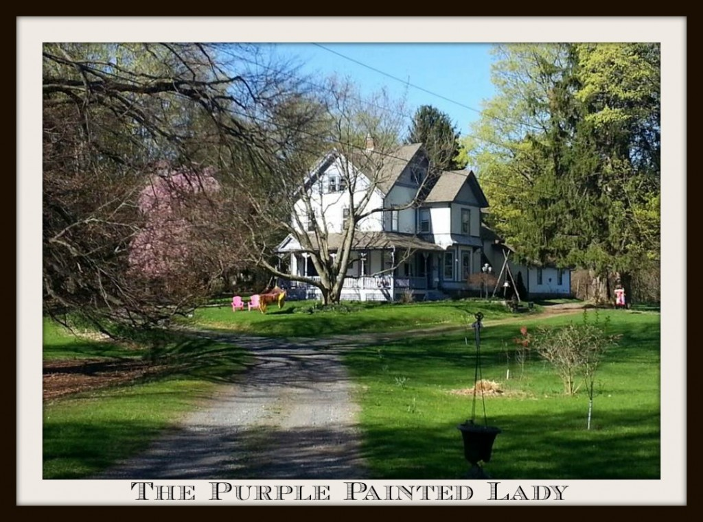 the purple painted lady HOME pic